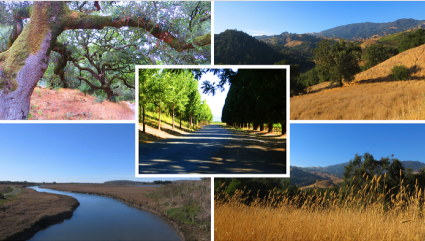 Landscapes of Sonoma Counry